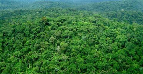 Venda de Ativo Florestal