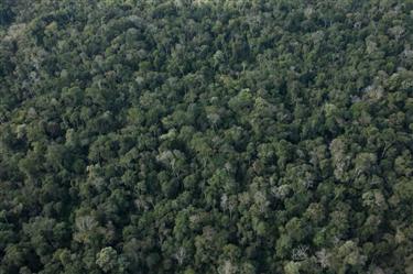 Compra e Venda de Ativos Florestais Brasil