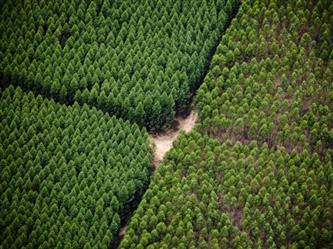 Vendo Fazenda de Eucalipto no Brasil MG com Ativos Florestais 5552 ha