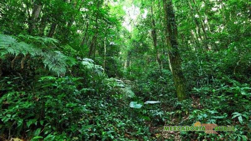 Crédito de Carbono no Acre Brasil