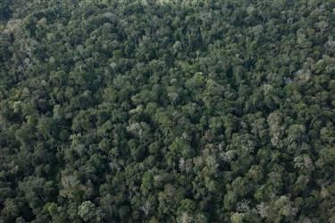 Area a Venda na Amazonia para Compensação Ambiental
