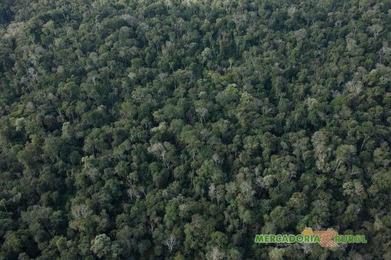 Area a Venda no Maranhão Brasil para Compensação Ambiental