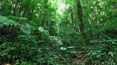 Area for Sale in the Amazon Brasil for Environmental Compensation