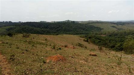 Vendo Fazenda de Eucalipto de 54 ha em Bertioga Minas Gerais