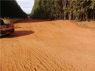 Vendo Fazenda de Eucalipto de 2400 ha no Norte de  Minas Gerais
