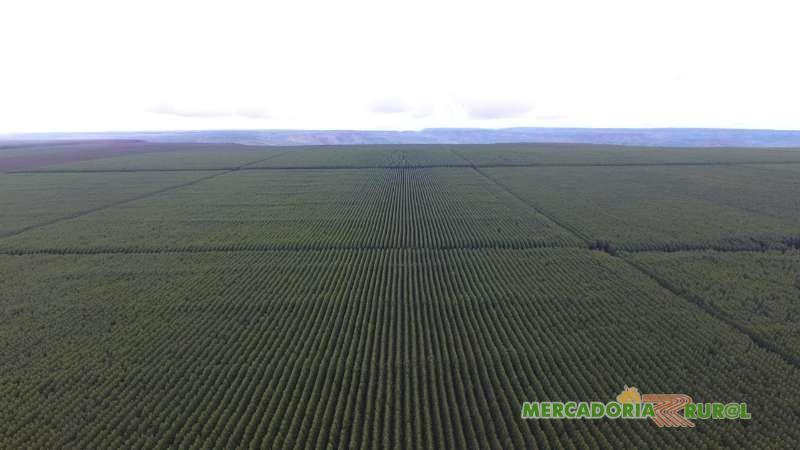 Vendo Fazenda de Eucalipto de 2200 ha no Norte Minas Gerais Brasil