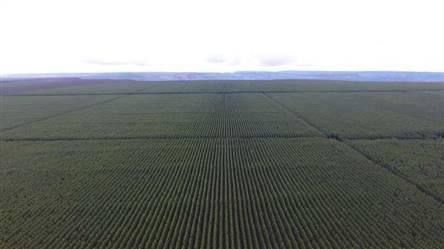 Fazenda de Eucalipto a venda de 1300 ha no Brasil