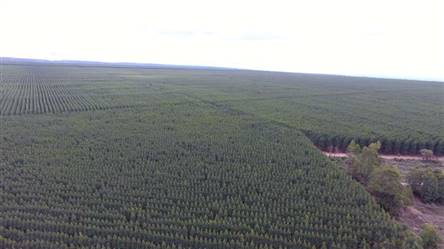 Eucalyptus farm for sale of 1300 ha in Brazil