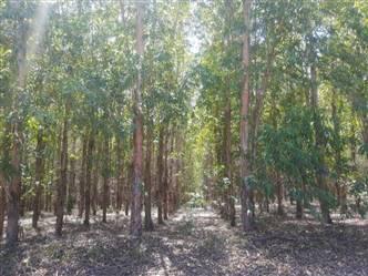 Fazenda a venda de 6000 ha Eucalipto em Minas Gerais