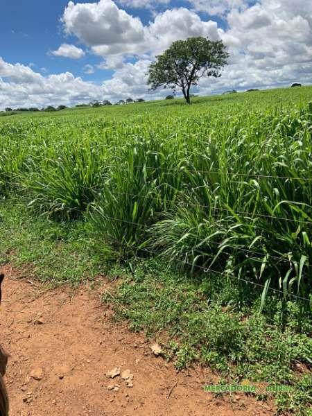 Vendo fazenda em Bocaiúva Minas Gerais para Pecuária de Corte Confinamento