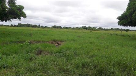 Fazenda gado de Corte a Venda no Pantanal Mato Grosso 22344 ha