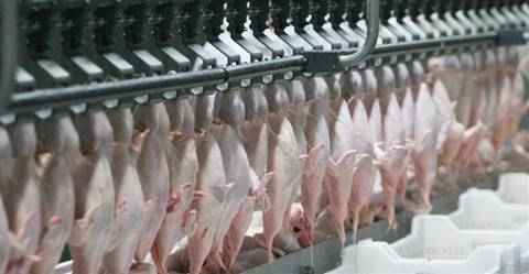 Whole Frozen Chicken without Giblets and Heads Brasil