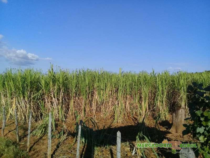 Vendo Fazenda com Alambique  Cachaça Orgânica em Minas Gerais Brasil