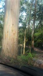 Fazendas com Floresta de Toras e Eucalipto em São Paulo