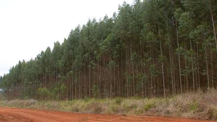 Fazenda de Eucalipto a venda de 10000 ha em Minas Gerais