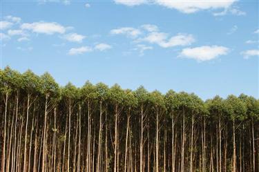 Vendo Fazenda de Eucalipto de 15.000 ha em Minas Gerais