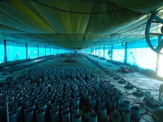 Alugo Granja para Criação de Galinha Caipiras Belo Horizonte