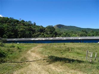 Alugo Granja para Frangos Criação de Frango Caipira Belo Horizonte