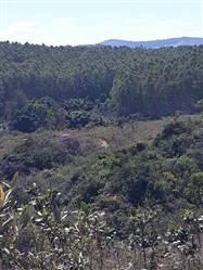 Fazenda de Eucalipto a venda de 35 ha em São Tiago Minas Gerais