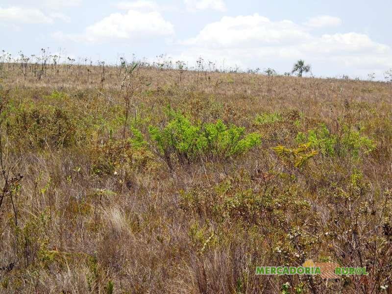 Fazenda a venda para plantio Eucalipto ou Gado de Corte de 1830 ha em Bocaiuva Minas Gerais