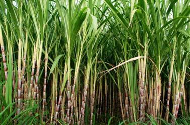 Fertilizante Foliar - ECONOMIZE MAIS 300% EM ADUBO