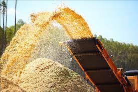 Produção e Venda de cavaco de Eucalipto Brasil