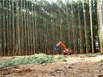 Seeing Eucalyptus Forest in Brazil