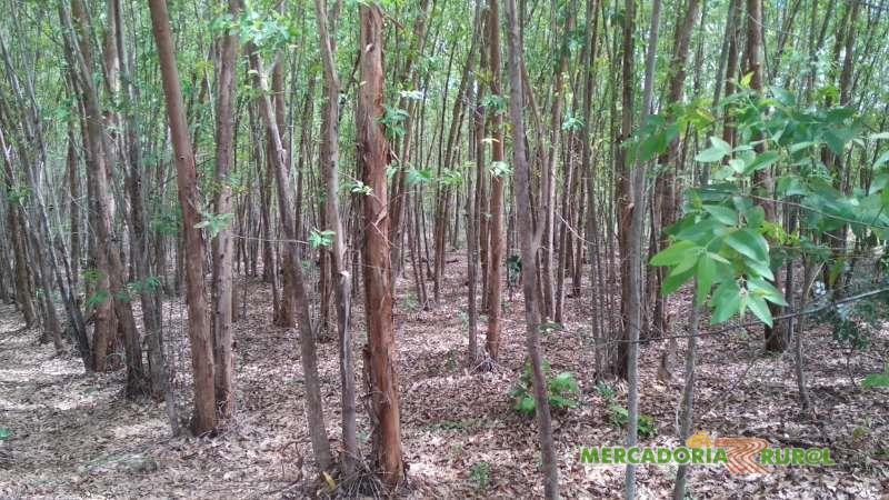 Vendo Floresta de Eucalipto para Carvão em Montes Claros de Goiás
