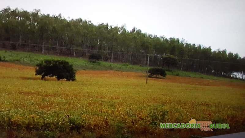 Vendo Floresta de Eucalipto de 30 ha em Paracatu MG