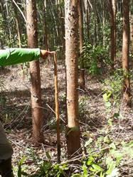 Vendo Floresta de Eucalipto em Andrelândia Minas Gerais