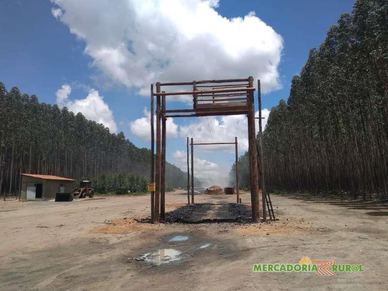 Vendo Floresta de Eucalipto 1300 ha  para Carvão no Norte de Minas