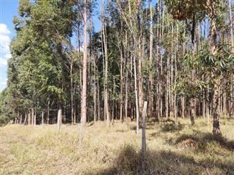Floresta de Eucalipto a venda  para Carvão em Alfenas MG