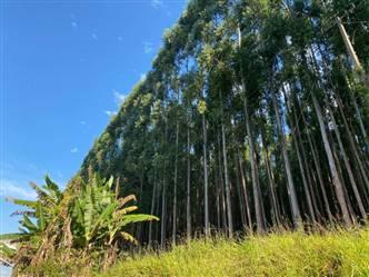 Vendo Floresta de Eucalipto 20 ha em Boa Esperança MG