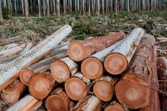Toras de Eucalipto a venda em Minas Gerais