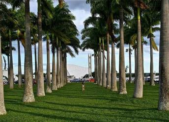 Palmeira Imperial a venda para entradas de Fazendas