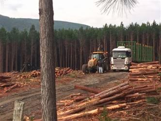 Vendo Floresta de Pinus em Santa Catarina