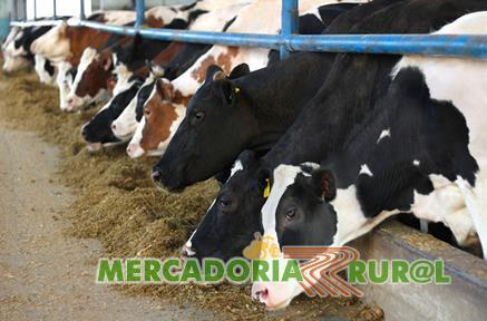 Consultoria Rural Belo Horizonte