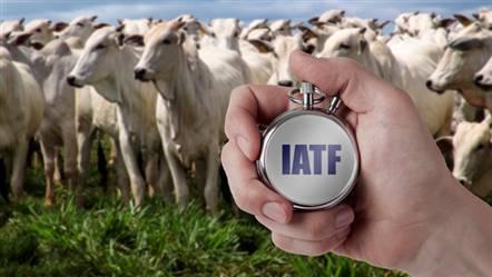 Protocolo IATF na bovinocultura de corte em belo Horizonte MG